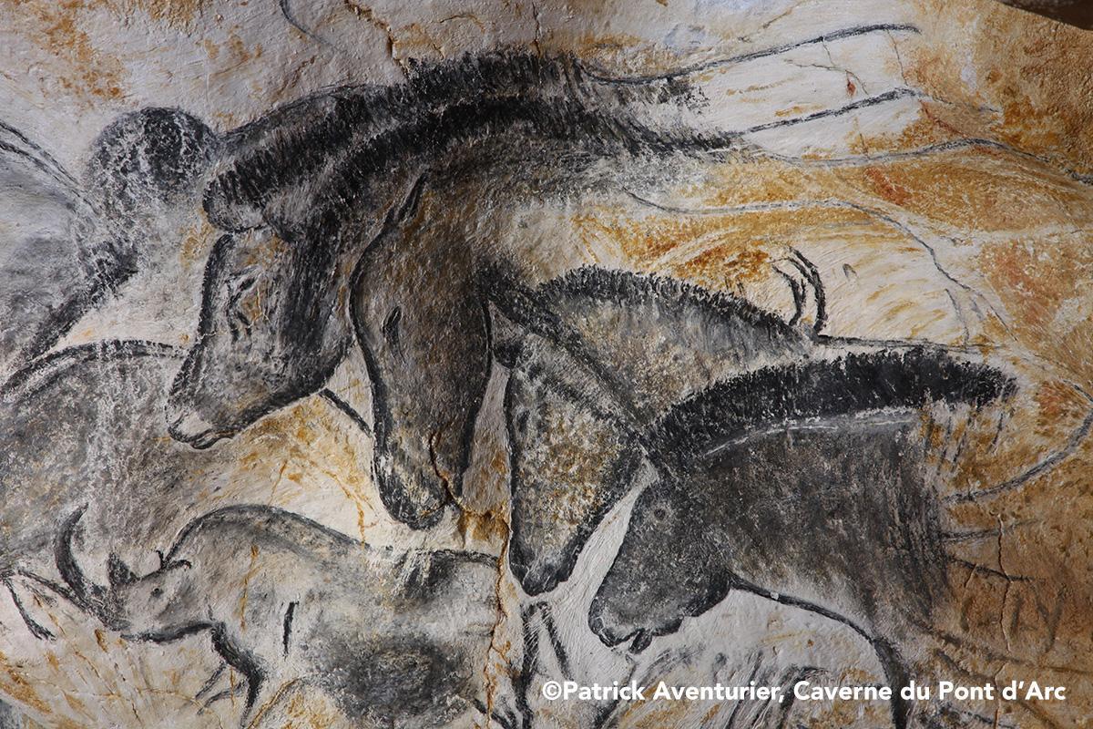 Panneau des chevaux grotte chauvet